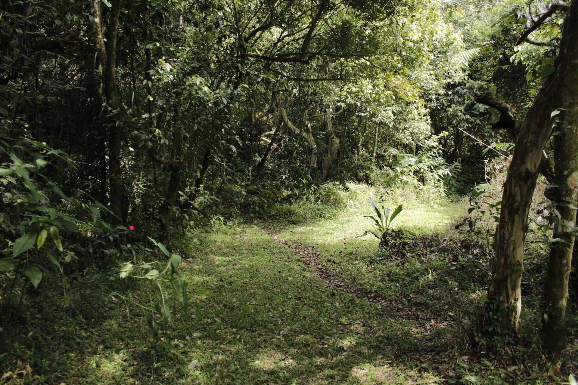 Casa Gaia - Bosque