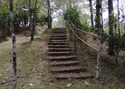 Casa Gaia - Camino al bosque