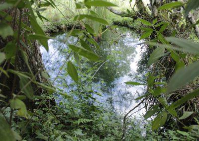 Casa Gaia - Poza de agua