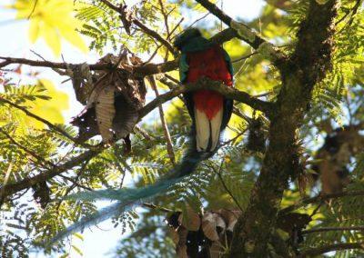 Ranchitos del Quetzal-Reserva Kukumatz