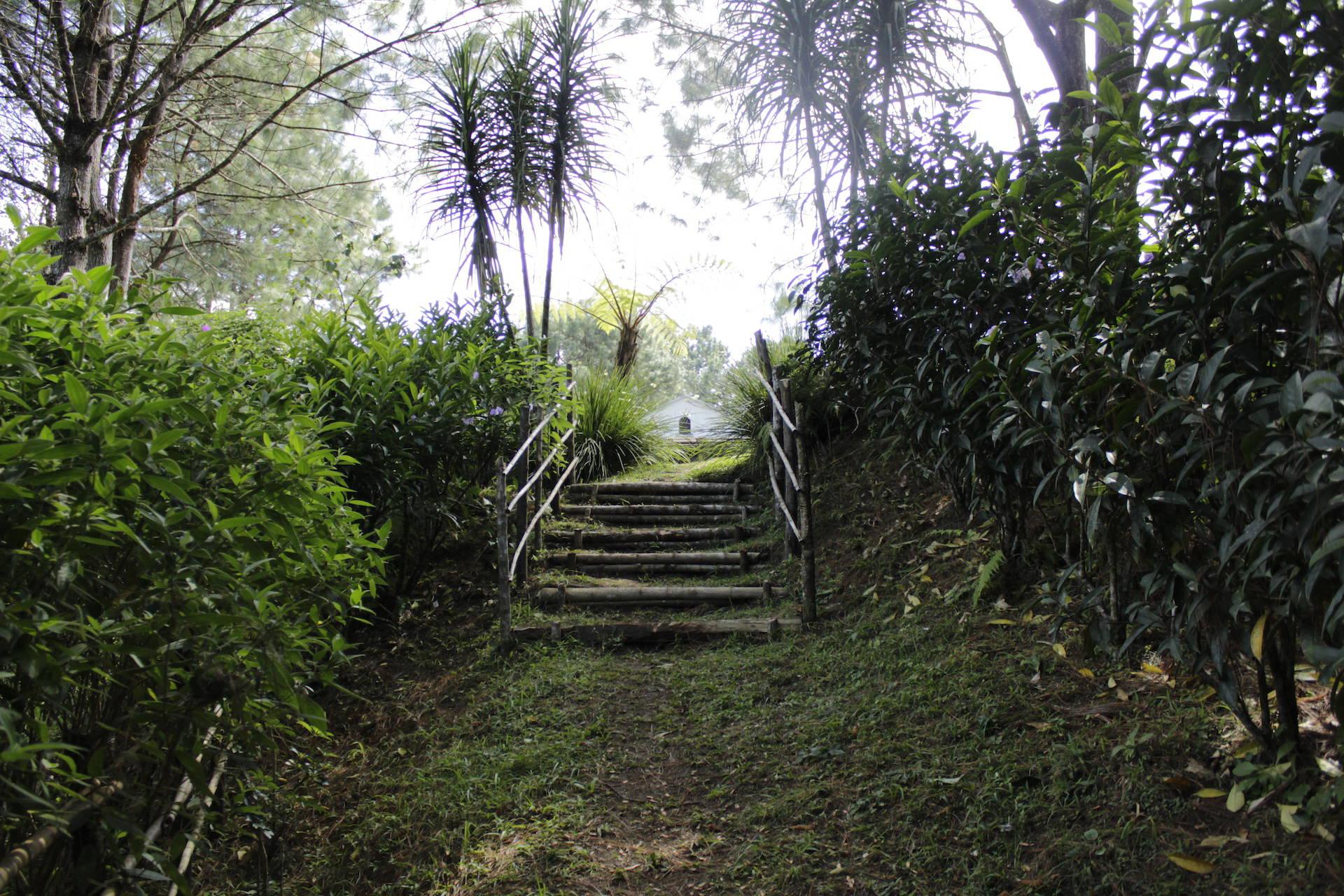Casa Gaia - Resgreso del bosque