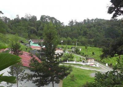 Plantación de Té Chirrepeco